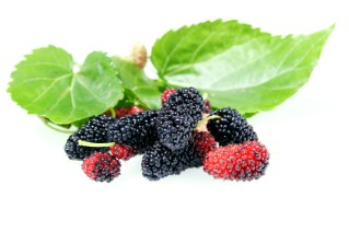 Mulberry berries and leaves